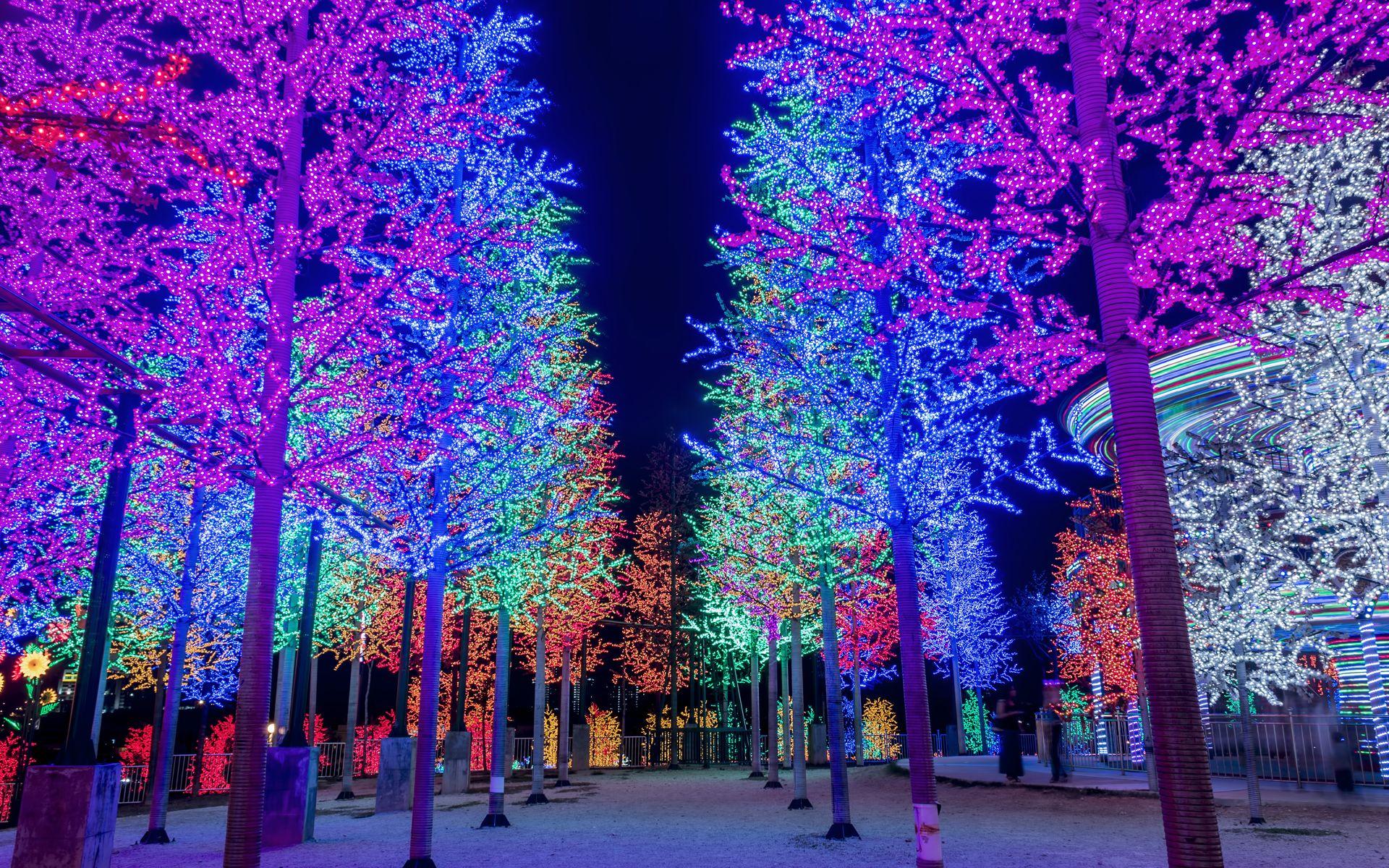 Boomverlichting Den Haag